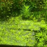 подв сад в голландском стиле (8)