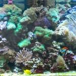 риф 3 метра (6)