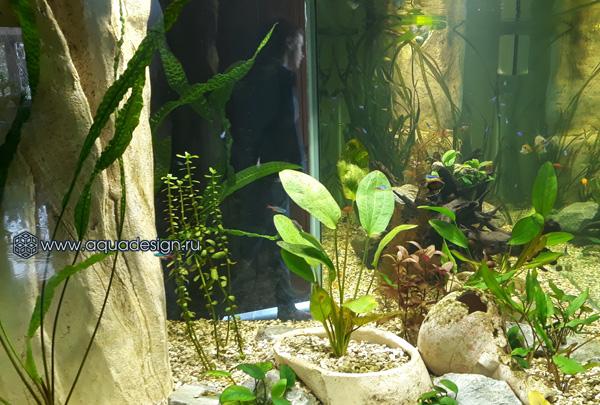 L-образный аквариум