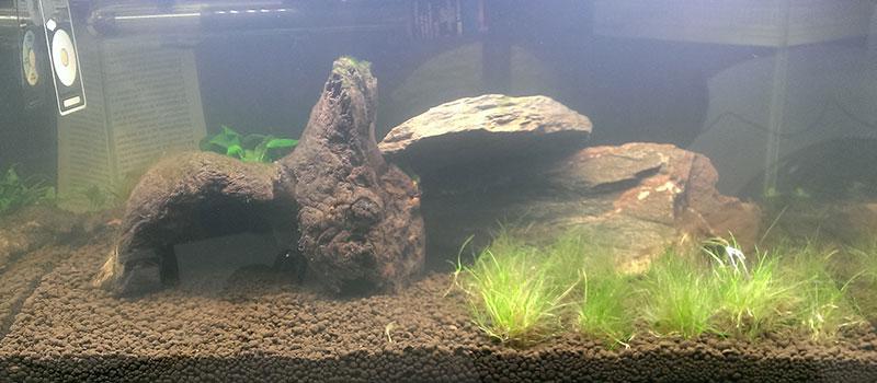 мутная вода в аквариуме почему что делать как устранить